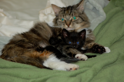 Black Kitty and Mama Cat the day after her surgery.