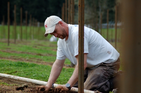 Nick planting vines in the vineyard.