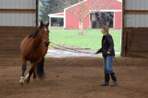 Shella working her Mustang, Bo.