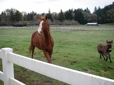Buck and Luigi on the farm in 2010, before we came to live here, running to the fence to say hi.
