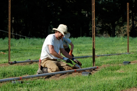 Nathan during the 2012 planting.  The metal pipes with the marks painted on them were used to measure the space between vines.