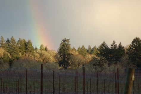 A Rainbow touches down, as they always do,  just beyond the vineyard.....