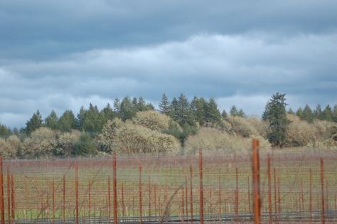 Rain clouds hover over the vineyard.