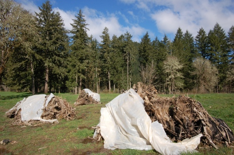 Our stump piles at the ready.  We will light them one at a time.