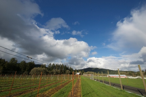 Two skies over the vineyard, storm clouds to the left and clear blue to the right.
