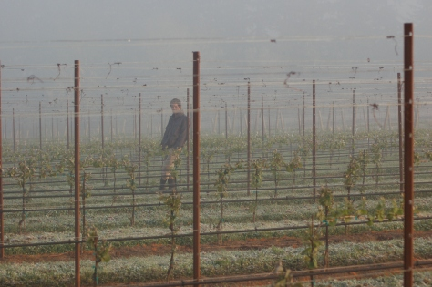 Nathan at dawn, taking the temperature in the vineyard.  But you can tell by looking at the ground that we didn't stop the frost.