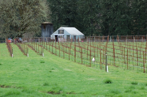 The Silo next to the Donkey Barn, as seen from the vineyard.