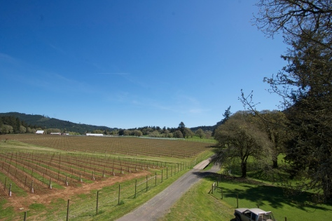 The view from the top, looking out over the NE corner of the vineyard and to the horse pasture beyond.