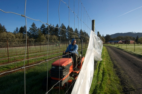The frost curtain going up while Nick (foreground) and Nathan (background) mow the vineyard. Sunny, clear days like this one are usually followed by a clear, cold night and the potential for frost.