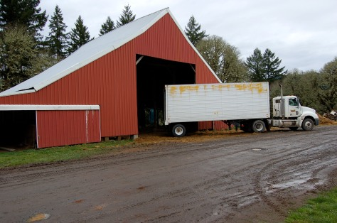 The delivery truck containing our vines backed up to the hay barn for unloading.