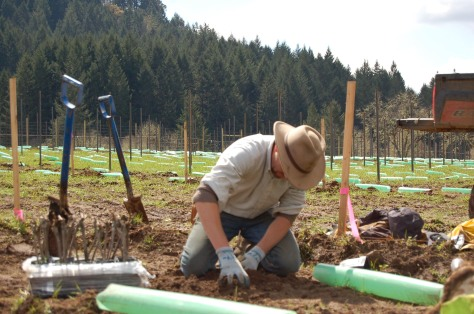 Nathan, The Grape Cowboy, planting a vine
