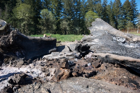 The Remains of The Burn: charred, smouldering stumps from the season's first fire.
