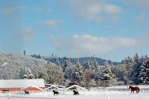 The horses running through the pasture on one of the coldest days last December.