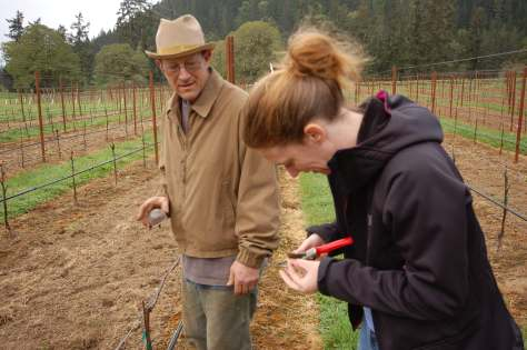Monja using the pruners to slice open a dormant bud. Bob is standing by with the magnifying glass.