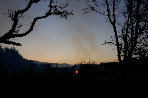 The fire as seen from across the vineyard.