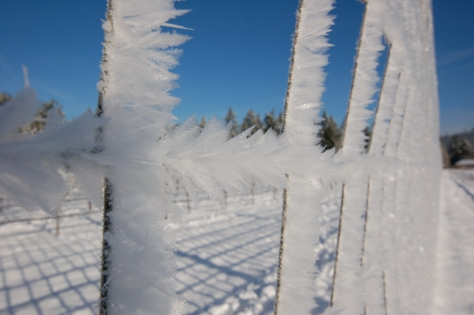 Feather-like ice crystals on the vineyard fence during the cold snap. I've never seen ice crystals like this before.