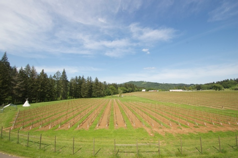 A current view of the vineyard from the top of The Tower.